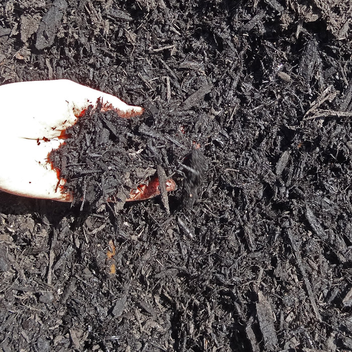 Shredded Black Bark Mulch